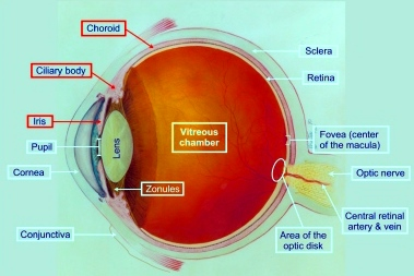 Uveitis Therapeutics Pipeline
